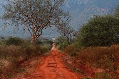Fotoalbum von Malindi.info - Safari Tsavo East/West 2012[ Foto 46 von 98 ]
