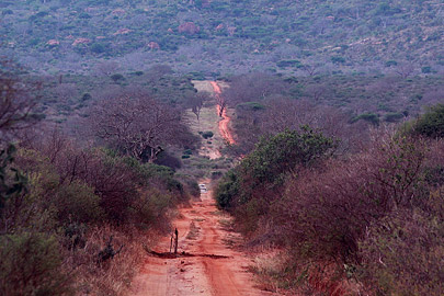 Fotoalbum von Malindi.info - Safari Tsavo East/West 2012[ Foto 48 von 98 ]