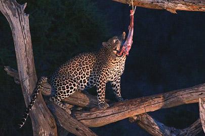 Fotoalbum von Malindi.info - Safari Tsavo East/West 2012[ Foto 50 von 98 ]