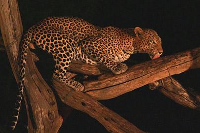 Fotoalbum von Malindi.info - Safari Tsavo East/West 2012[ Foto 51 von 98 ]