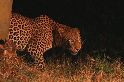 Fotoalbum von Malindi.info - Safari Tsavo East/West 2012[ Foto 52 von 98 ]