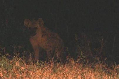 Fotoalbum von Malindi.info - Safari Tsavo East/West 2012[ Foto 53 von 98 ]