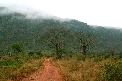 Fotoalbum von Malindi.info - Safari Tsavo East/West 2012[ Foto 54 von 98 ]