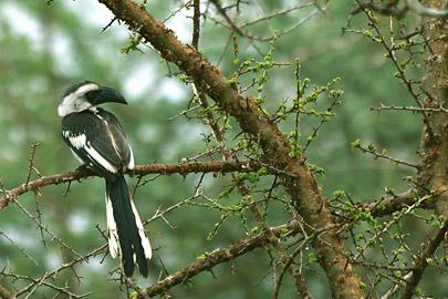 Fotoalbum von Malindi.info - Safari Tsavo East/West 2012[ Foto 56 von 98 ]