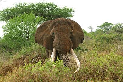 Fotoalbum von Malindi.info - Safari Tsavo East/West 2012[ Foto 57 von 98 ]