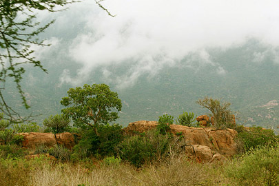Fotoalbum von Malindi.info - Safari Tsavo East/West 2012[ Foto 59 von 98 ]
