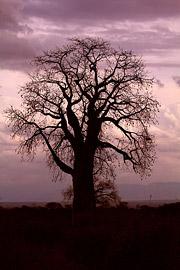 Fotoalbum von Malindi.info - Safari Tsavo East/West 2012[ Foto 67 von 98 ]