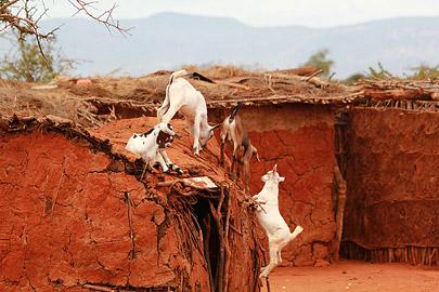 Fotoalbum von Malindi.info - Safari Tsavo East/West 2012[ Foto 88 von 98 ]