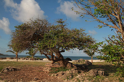 Fotoalbum von Malindi.info - Impressionen von Malindi 08/2012[ Foto 5 von 90 ]