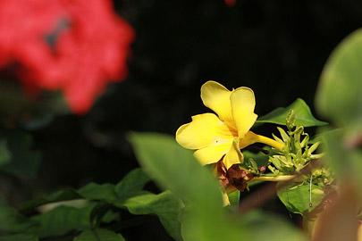 Fotoalbum von Malindi.info - Impressionen von Malindi 08/2012[ Foto 15 von 90 ]