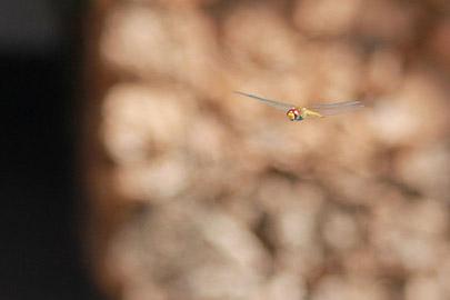 Fotoalbum von Malindi.info - Impressionen von Malindi 08/2012[ Foto 60 von 90 ]