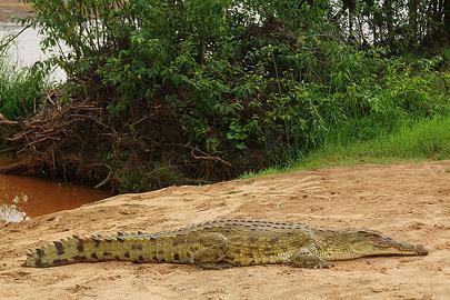 Fotoalbum von Malindi.info - Safari Tsavo/East und Amboseli Dezember 2012[ Foto 2 von 145 ]