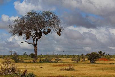 Fotoalbum von Malindi.info - Safari Tsavo/East und Amboseli Dezember 2012[ Foto 10 von 145 ]