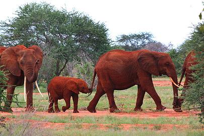 Fotoalbum von Malindi.info - Safari Tsavo/East und Amboseli Dezember 2012[ Foto 13 von 145 ]