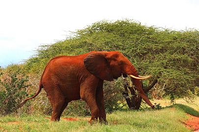 Fotoalbum von Malindi.info - Safari Tsavo/East und Amboseli Dezember 2012[ Foto 14 von 145 ]