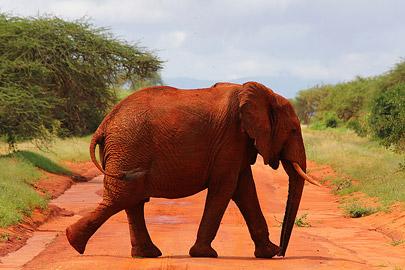 Fotoalbum von Malindi.info - Safari Tsavo/East und Amboseli Dezember 2012[ Foto 16 von 145 ]