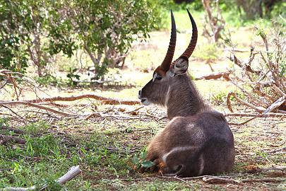 Fotoalbum von Malindi.info - Safari Tsavo/East und Amboseli Dezember 2012[ Foto 18 von 145 ]