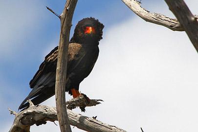 Fotoalbum von Malindi.info - Safari Tsavo/East und Amboseli Dezember 2012[ Foto 25 von 145 ]