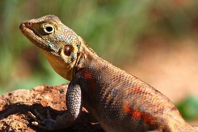 Fotoalbum von Malindi.info - Safari Tsavo/East und Amboseli Dezember 2012[ Foto 26 von 145 ]