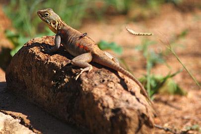 Fotoalbum von Malindi.info - Safari Tsavo/East und Amboseli Dezember 2012[ Foto 27 von 145 ]