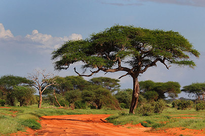 Fotoalbum von Malindi.info - Safari Tsavo/East und Amboseli Dezember 2012[ Foto 38 von 145 ]