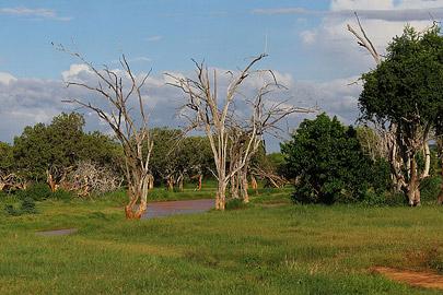 Fotoalbum von Malindi.info - Safari Tsavo/East und Amboseli Dezember 2012[ Foto 39 von 145 ]