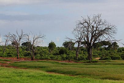 Fotoalbum von Malindi.info - Safari Tsavo/East und Amboseli Dezember 2012[ Foto 40 von 145 ]