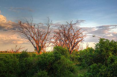 Fotoalbum von Malindi.info - Safari Tsavo/East und Amboseli Dezember 2012[ Foto 44 von 145 ]