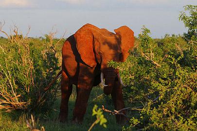 Fotoalbum von Malindi.info - Safari Tsavo/East und Amboseli Dezember 2012[ Foto 45 von 145 ]