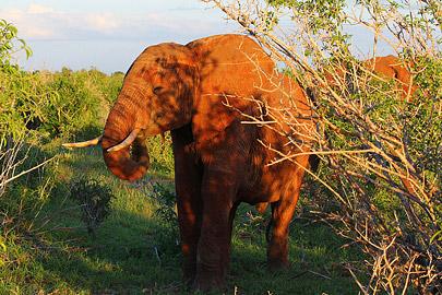Fotoalbum von Malindi.info - Safari Tsavo/East und Amboseli Dezember 2012[ Foto 46 von 145 ]