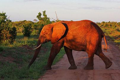 Fotoalbum von Malindi.info - Safari Tsavo/East und Amboseli Dezember 2012[ Foto 47 von 145 ]