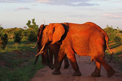 Fotoalbum von Malindi.info - Safari Tsavo/East und Amboseli Dezember 2012[ Foto 48 von 145 ]