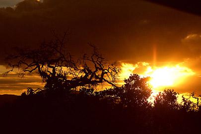 Fotoalbum von Malindi.info - Safari Tsavo/East und Amboseli Dezember 2012[ Foto 49 von 145 ]