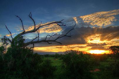 Fotoalbum von Malindi.info - Safari Tsavo/East und Amboseli Dezember 2012[ Foto 51 von 145 ]