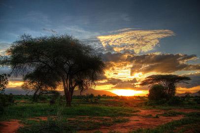 Fotoalbum von Malindi.info - Safari Tsavo/East und Amboseli Dezember 2012[ Foto 52 von 145 ]