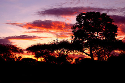 Fotoalbum von Malindi.info - Safari Tsavo/East und Amboseli Dezember 2012[ Foto 54 von 145 ]