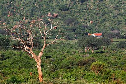 Fotoalbum von Malindi.info - Safari Tsavo/East und Amboseli Dezember 2012[ Foto 56 von 145 ]