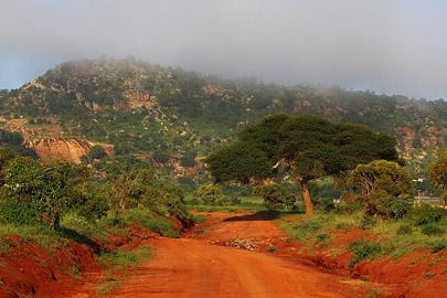 Fotoalbum von Malindi.info - Safari Tsavo/East und Amboseli Dezember 2012[ Foto 58 von 145 ]
