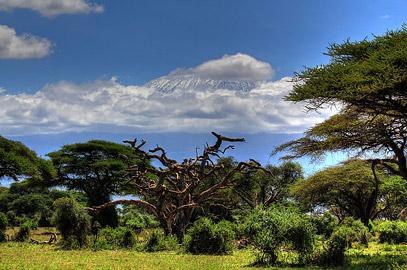 Fotoalbum von Malindi.info - Safari Tsavo/East und Amboseli Dezember 2012[ Foto 72 von 145 ]