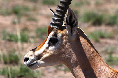 Fotoalbum von Malindi.info - Safari Tsavo/East und Amboseli Dezember 2012[ Foto 76 von 145 ]