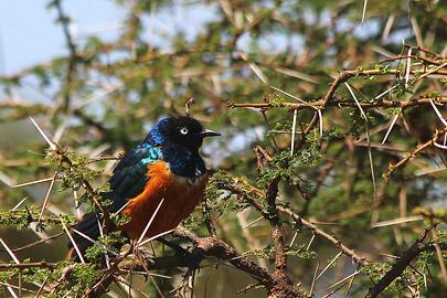 Fotoalbum von Malindi.info - Safari Tsavo/East und Amboseli Dezember 2012[ Foto 78 von 145 ]