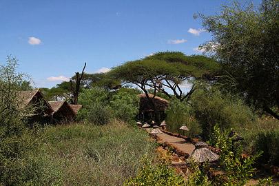 Fotoalbum von Malindi.info - Safari Tsavo/East und Amboseli Dezember 2012[ Foto 80 von 145 ]