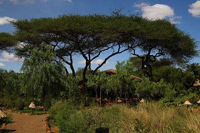 Fotoalbum von Malindi.info - Safari Tsavo/East und Amboseli Dezember 2012[ Foto 86 von 145 ]