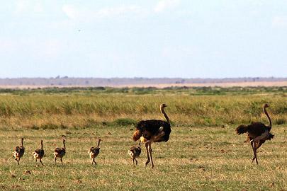 Fotoalbum von Malindi.info - Safari Tsavo/East und Amboseli Dezember 2012[ Foto 91 von 145 ]