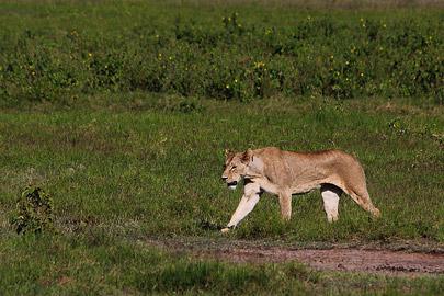 Fotoalbum von Malindi.info - Safari Tsavo/East und Amboseli Dezember 2012[ Foto 100 von 145 ]