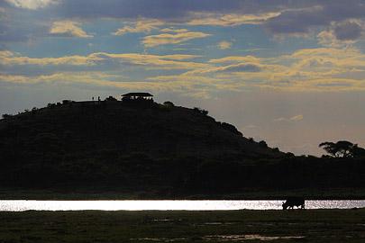 Fotoalbum von Malindi.info - Safari Tsavo/East und Amboseli Dezember 2012[ Foto 106 von 145 ]