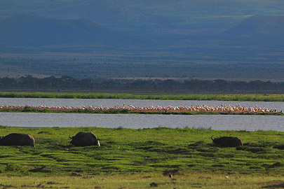Fotoalbum von Malindi.info - Safari Tsavo/East und Amboseli Dezember 2012[ Foto 107 von 145 ]