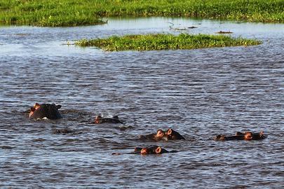 Fotoalbum von Malindi.info - Safari Tsavo/East und Amboseli Dezember 2012[ Foto 111 von 145 ]