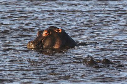 Fotoalbum von Malindi.info - Safari Tsavo/East und Amboseli Dezember 2012[ Foto 112 von 145 ]