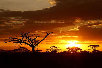 Fotoalbum von Malindi.info - Safari Tsavo/East und Amboseli Dezember 2012[ Foto 117 von 145 ]